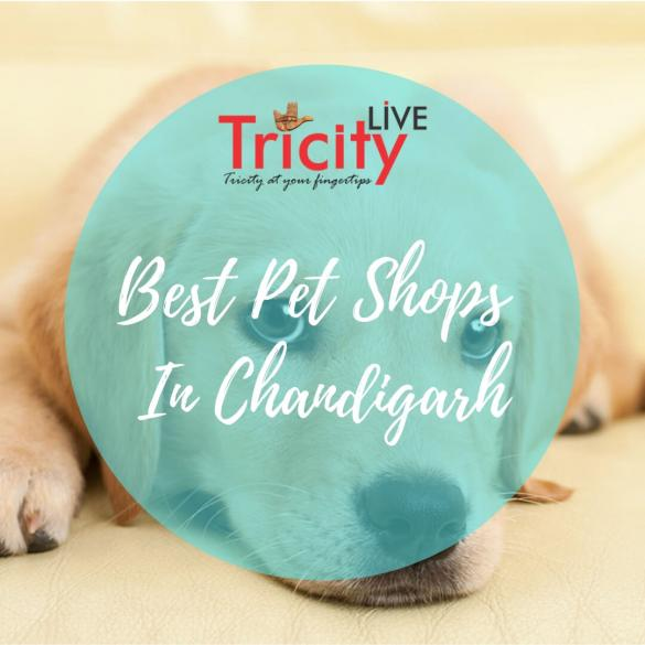 Best Pet Shops In Chandigarh